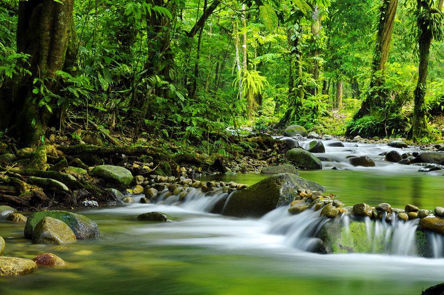 Mountain stream in a tropical rain forest.